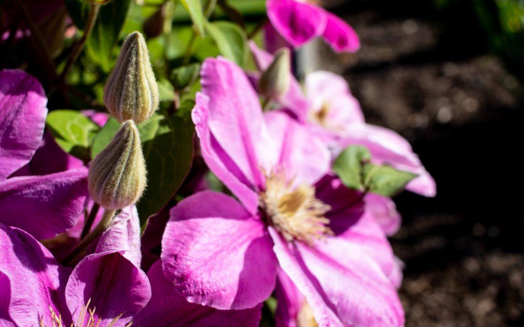 Frühlingsgrüße aus dem Garten